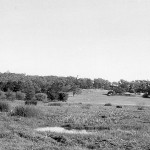"View across Alderbury Flats towards Perry House., May 1957.  Watson described this area as ""an irregular northern flooded area connected on its western extremity by a drainage channel to the Western Lake"".  This is the open drain visible in photo 'Library Board of WA 03'.  One-tree (Reabold) Hill visible in distance (see photo 'Town of Cambridge 01')."