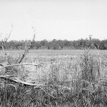 View looking roughly SSW across East Lake, 18 May 1957.  Dead trees from 20-30 years of water level rise are evident.  This photo appears in Chapter 2 as Plate 2.5.